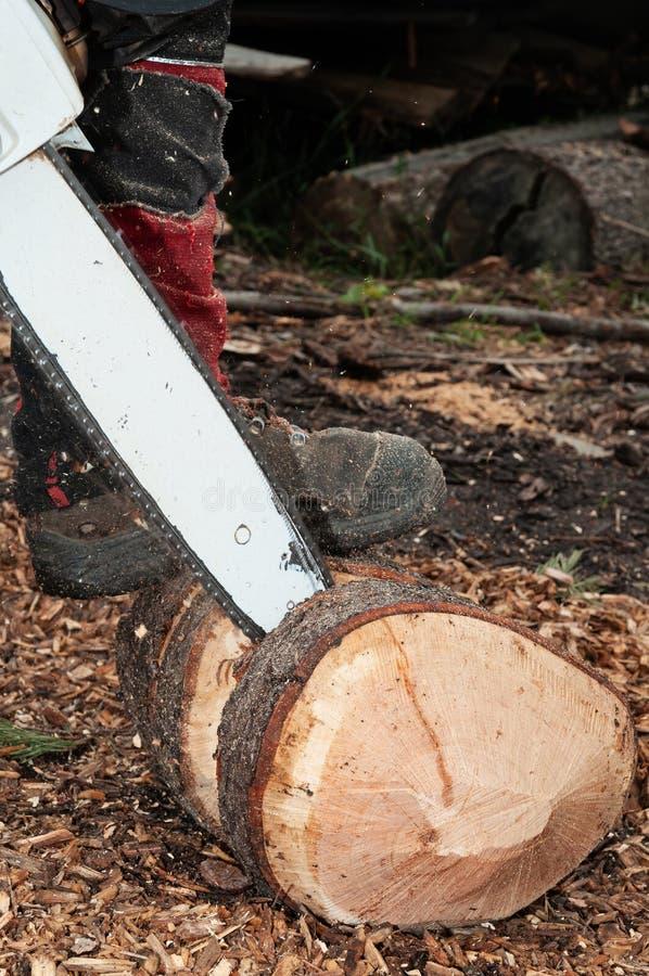 Coordonnée de travailleur de sylviculture découpant un morceau de bois avec la tronçonneuse photographie stock libre de droits