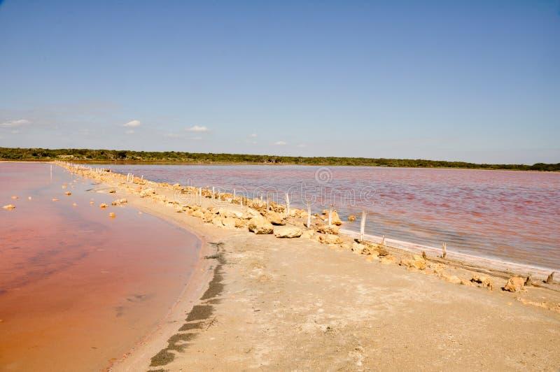 coorong halitu jeziora park narodowy zdjęcia stock