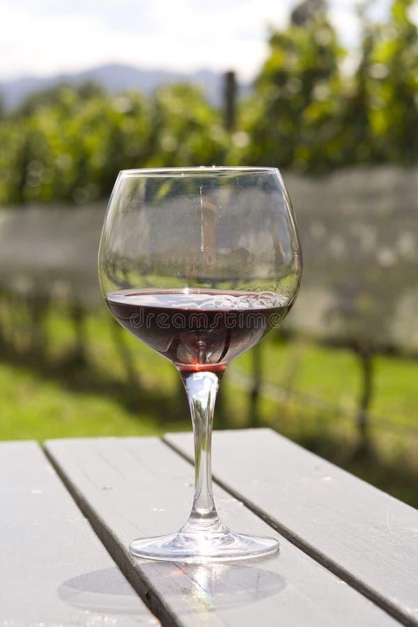 Copa con el vino rojo en viñedo fotografía de archivo