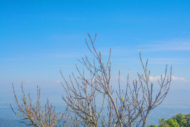 Copa de árvore de sakura no fundo vívido do céu azul fotografia de stock