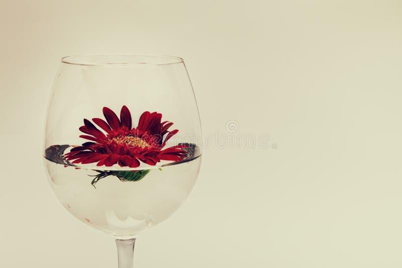 Copa de vino con agua y el gerbera rojo fotografía de archivo