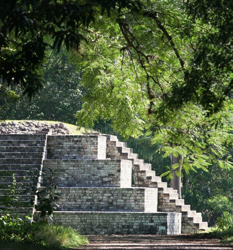 copan руины Гондураса майяские стоковая фотография