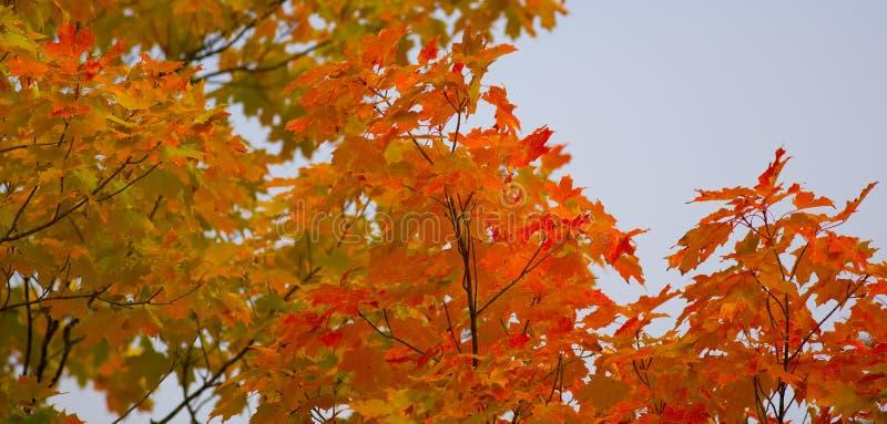 Copas de árbol de septiembre en Minnesota foto de archivo