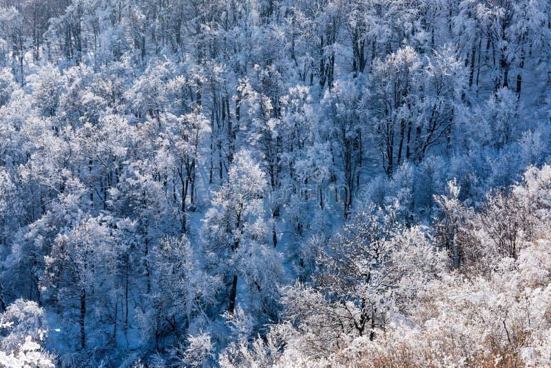 Copas de árvore da floresta decíduo coberto de neve, inverno foto de stock