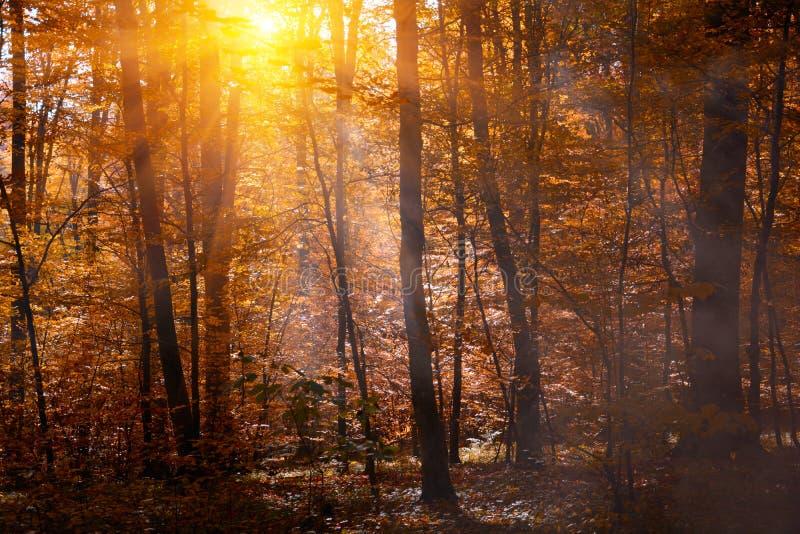 Copas de árvore do outono na floresta da queda com céu e luz solar da névoa através dos ramos de árvore do outono Fundo do outono fotos de stock royalty free