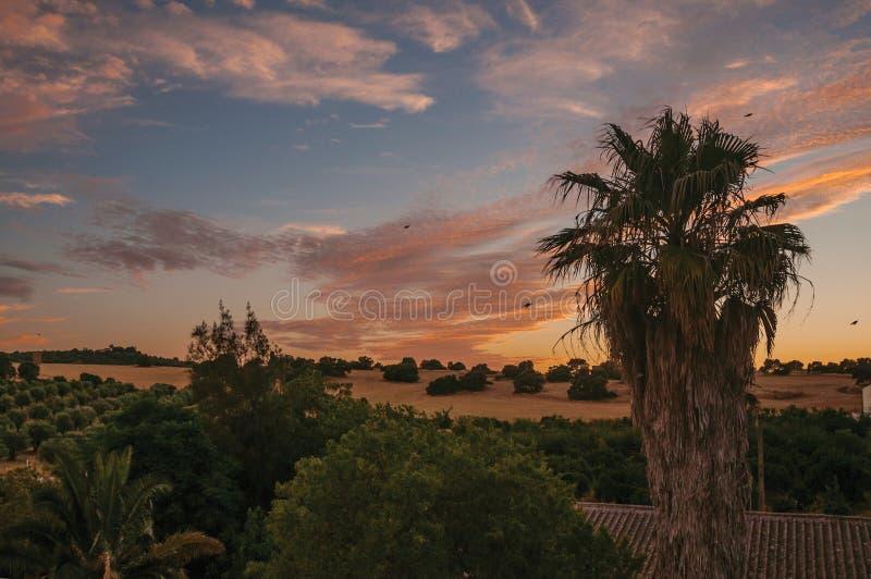 Copas de la palma y cielo multicolor en una granja fotografía de archivo