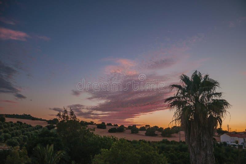 Copas de la palma y cielo multicolor en una granja imagenes de archivo