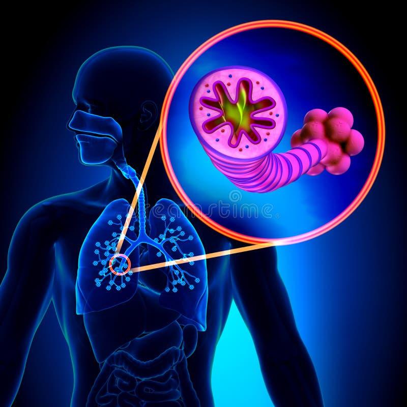 COPD - Chronische obstructieve longziekte royalty-vrije illustratie