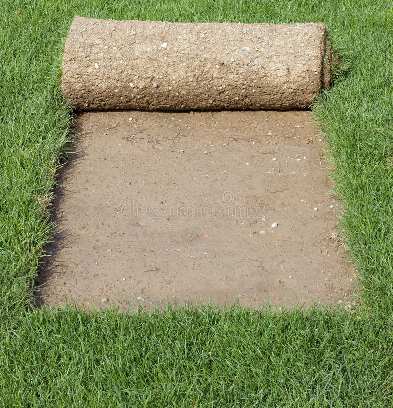 Coperchio della moquette dell'erba immagini stock