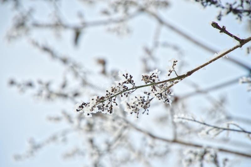 Coperto di ramo di albero della neve contro il cielo blu Inverno immagini stock libere da diritti