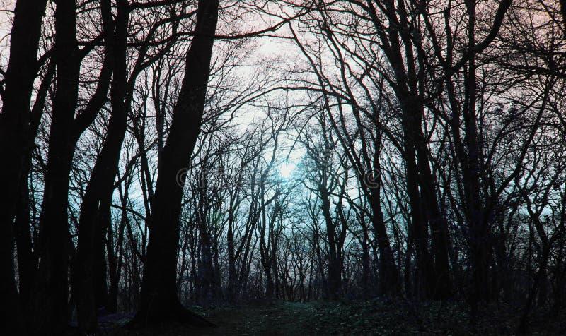 Copertura dell'album di musica del metallo, foresta di sogno profonda fotografia stock