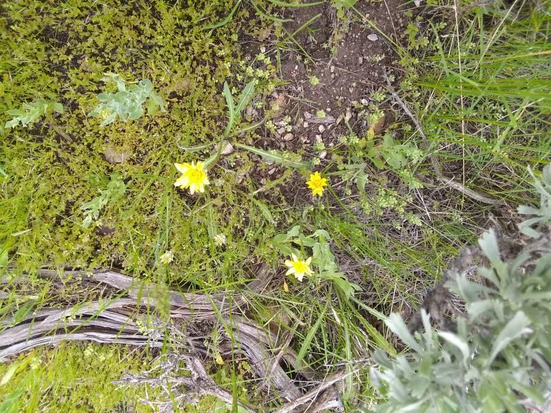 Copertura dell'erba del fiore giallo fotografie stock libere da diritti