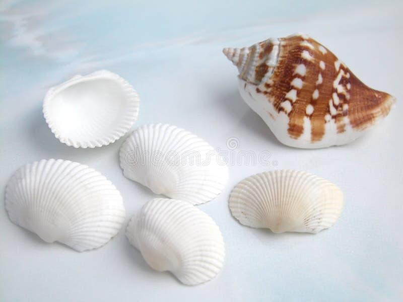 Download Coperture fotografia stock. Immagine di seashell, coperture - 211444