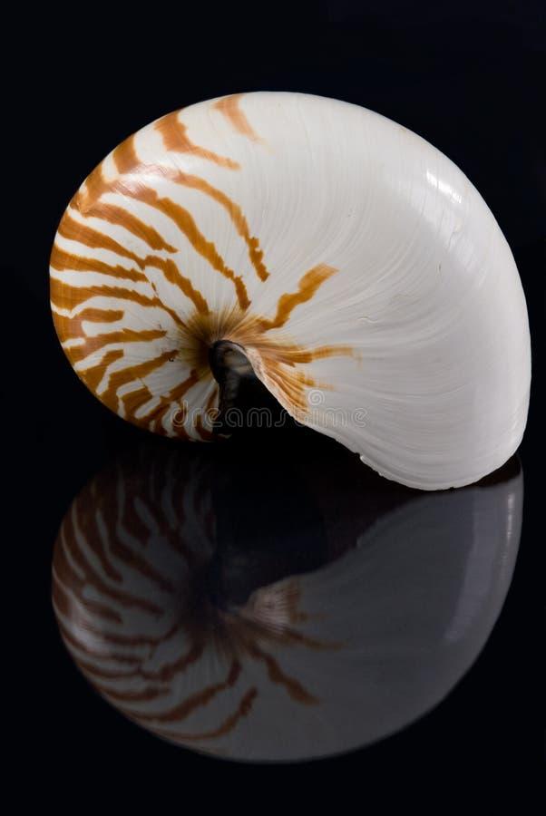 Coperture & riflessione del Nautilus fotografia stock