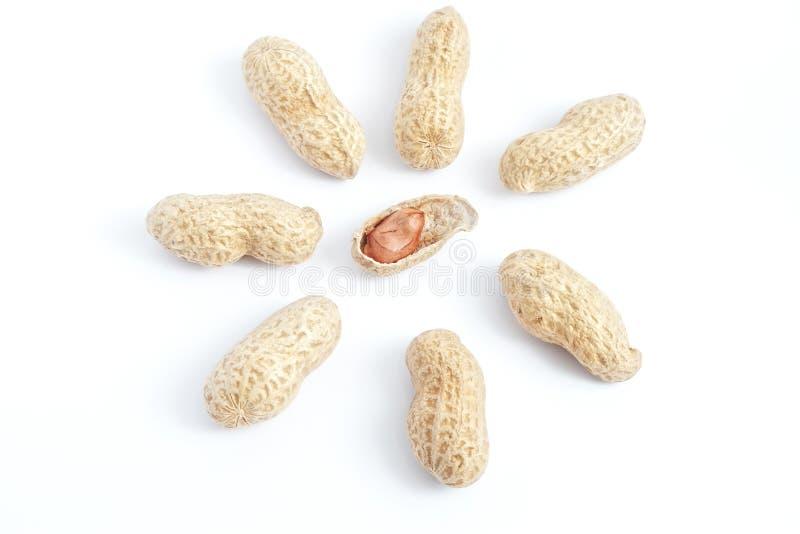 Coperture aperte dell'arachide con il nocciolo fotografia stock libera da diritti