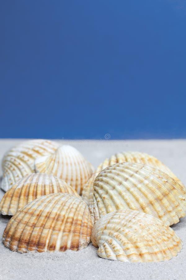 Coperture del cardio sulla sabbia fotografia stock