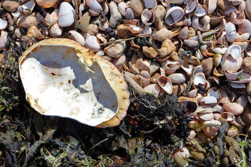 Coperture del granchio su una spiaggia immagine stock
