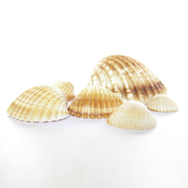 Download Coperture del mare immagine stock. Immagine di spiaggia - 3894667