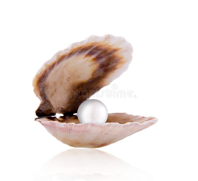 Coperture del mare con la perla immagine stock