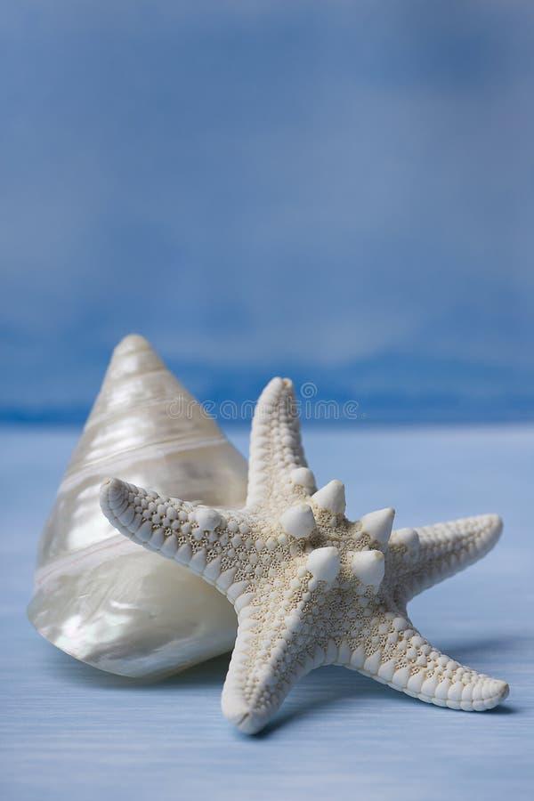 Coperture del mare e pesci della stella sull'acquerello blu immagini stock libere da diritti