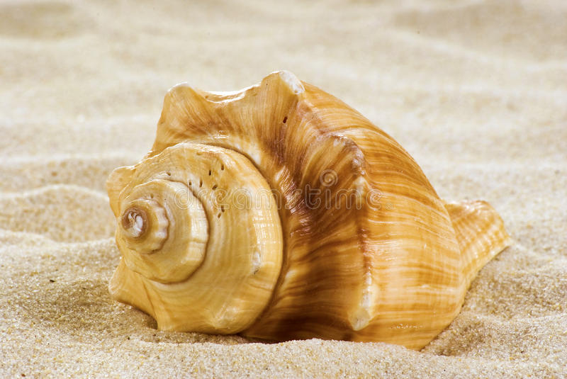 Coperture del mare sulla spiaggia immagine stock libera da diritti