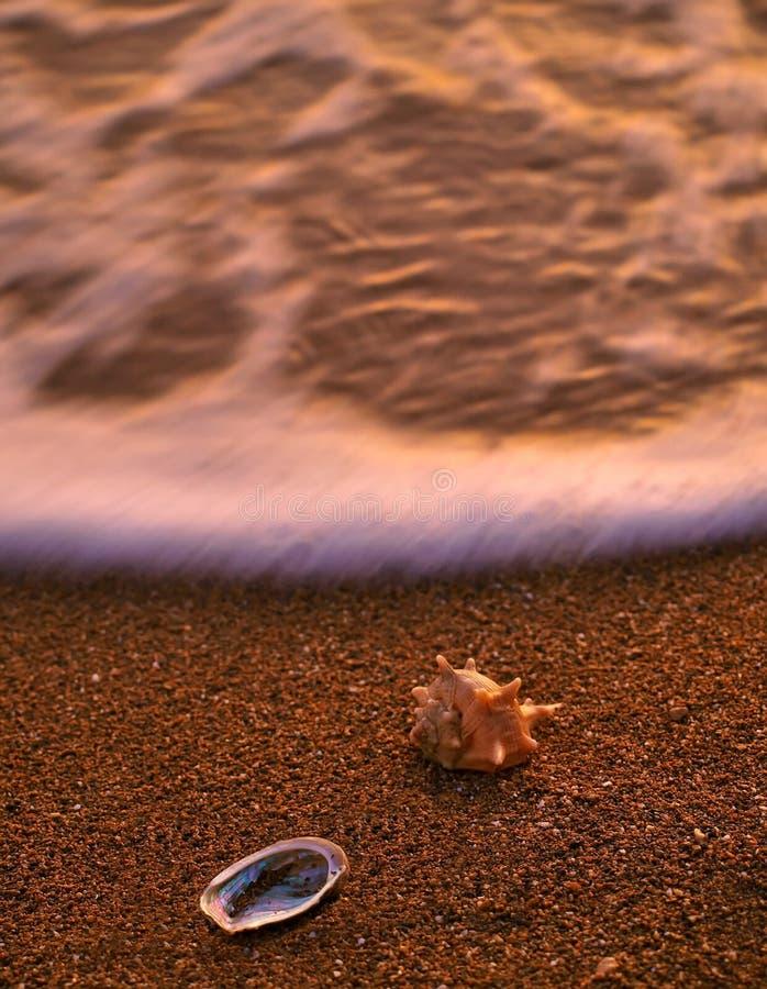 Coperture del mare sulla spiaggia sabbiosa 1 immagini stock
