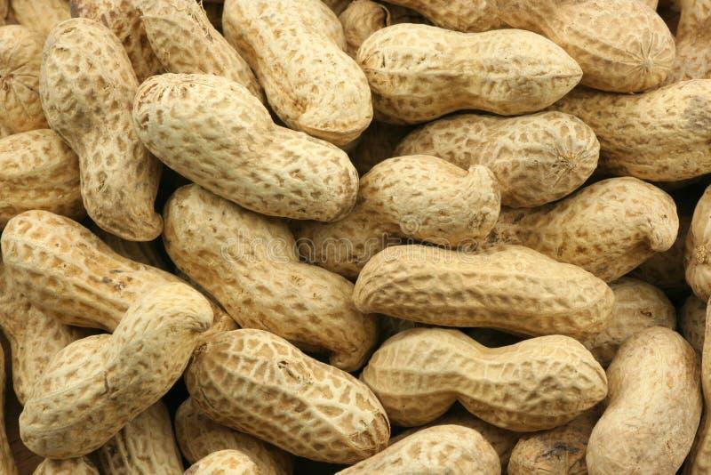 Coperture dell'arachide fotografia stock libera da diritti