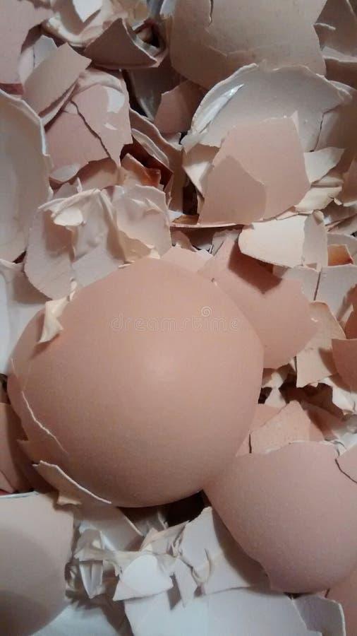 Coperture dell'uovo al forno immagine stock libera da diritti