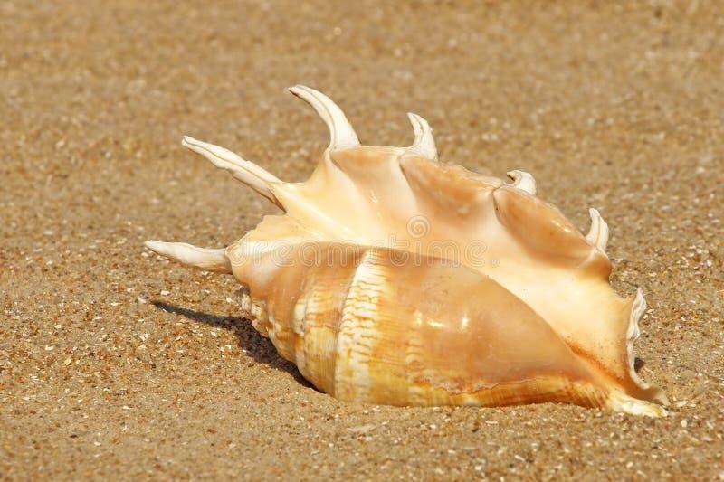 Coperture della conca sulla spiaggia sabbiosa. immagini stock libere da diritti