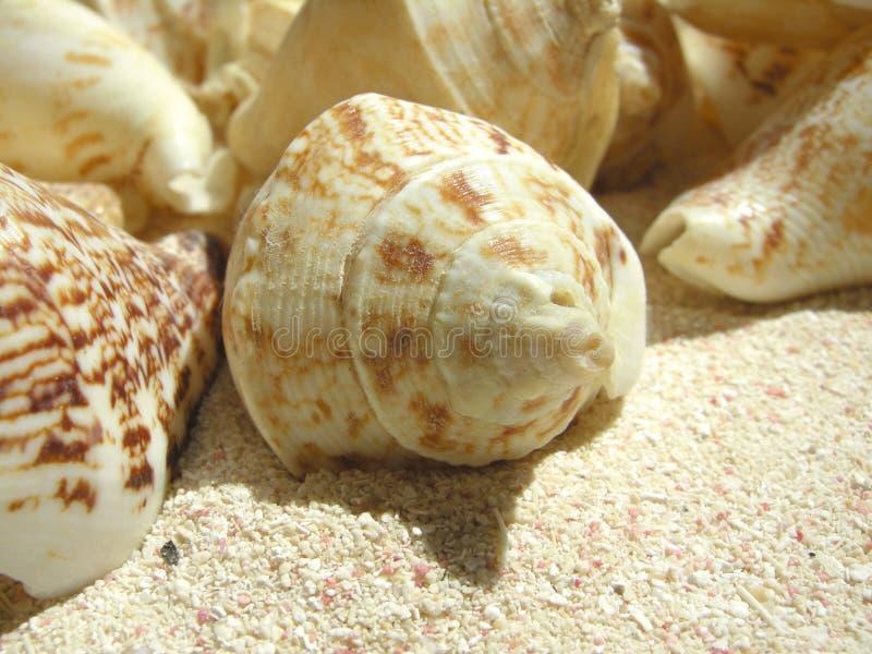 Coperture della spiaggia fotografie stock