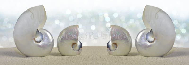 Coperture di nautilus immagini stock libere da diritti