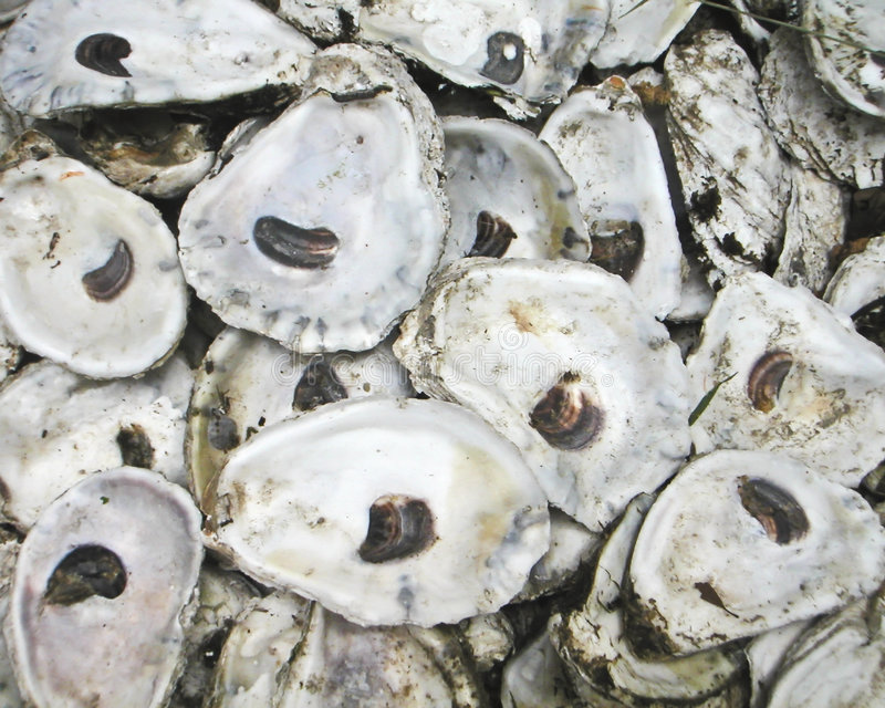 Coperture di ostrica fotografie stock libere da diritti