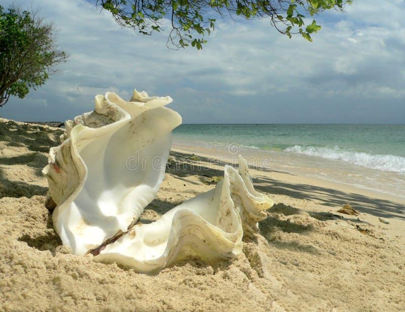 Coperture di ostrica di corallo della spiaggia   fotografie stock