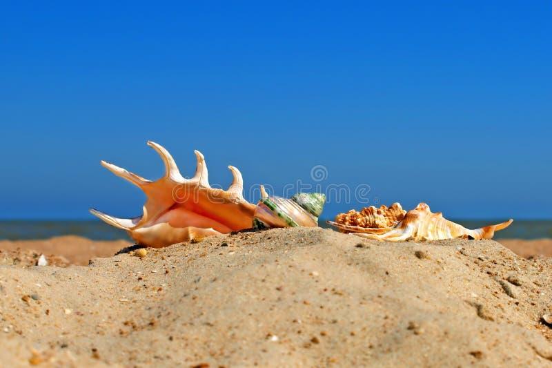 Coperture differenti della conca su una spiaggia. immagine stock