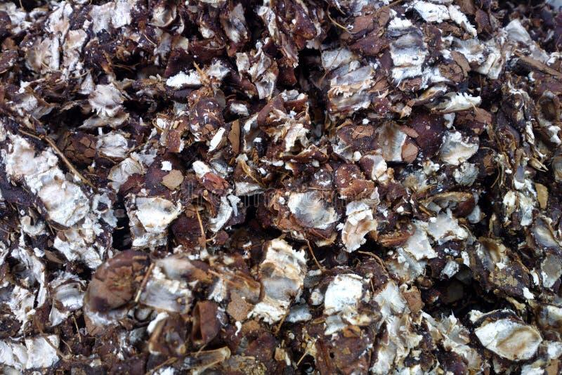 Coperture schiacciate della noce di cocco per la fabbricazione di pinibricket immagine stock libera da diritti