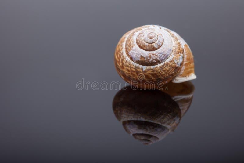 Coperture a spirale della lumaca sulla foto nera dell'estratto della superficie dello specchio immagini stock libere da diritti