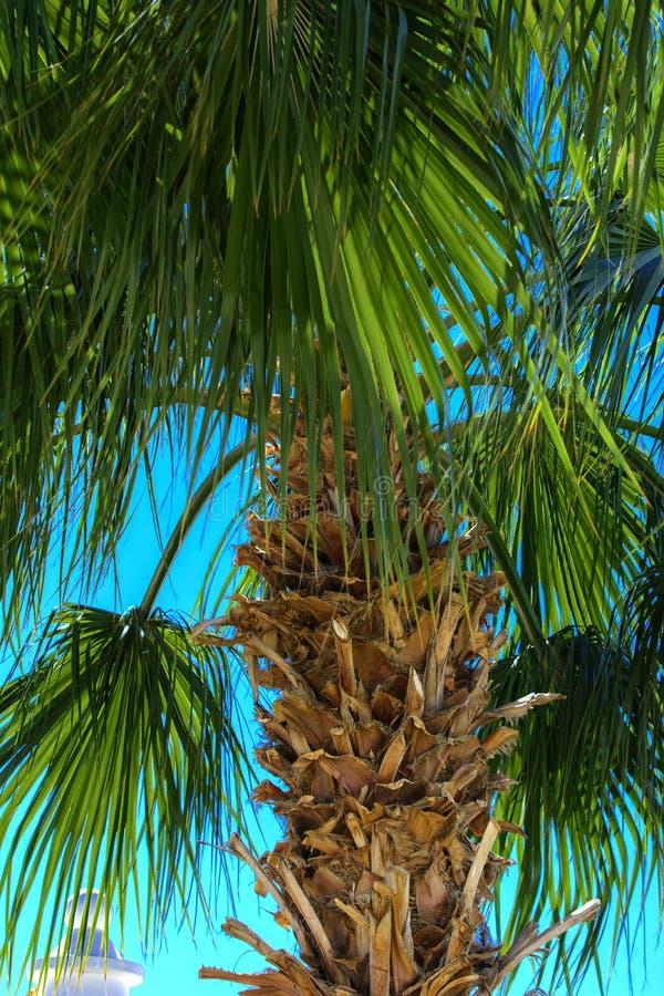 Copi lo spazio Siluetta del ramo superiore di un albero tropicale del cocco contro un cielo blu e una luce intensa fotografie stock