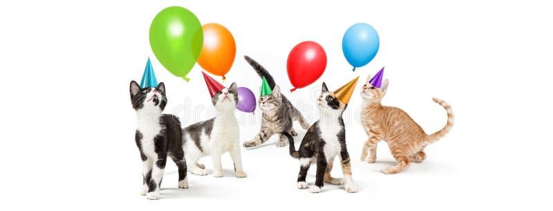 Copia juguetona de Kitten Birthday Party Web Banner foto de archivo