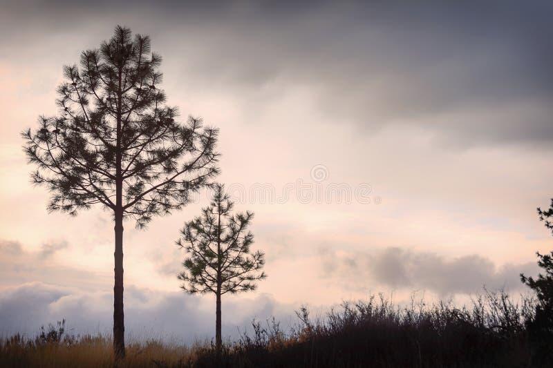 Copia-spazio della siluetta degli alberi contro i cieli tempestosi immagine stock