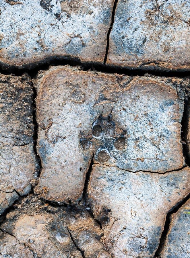 Copie animale de patte au sol photo libre de droits