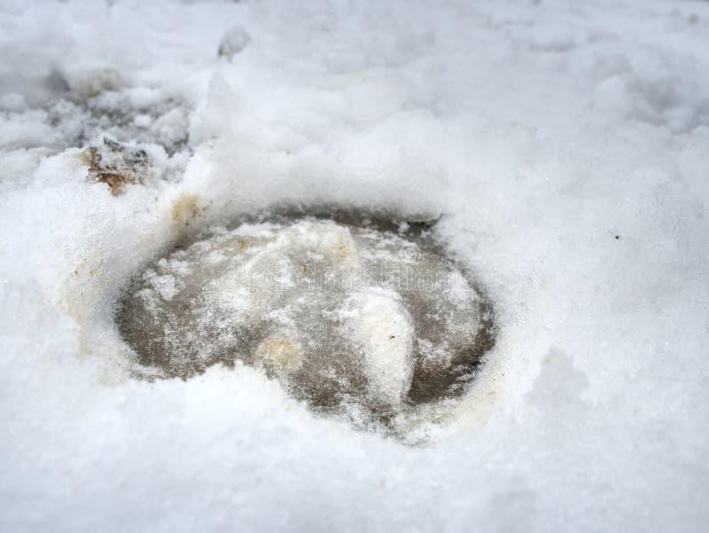 Copie boueuse de sabot de cheval dans la neige glissante images libres de droits