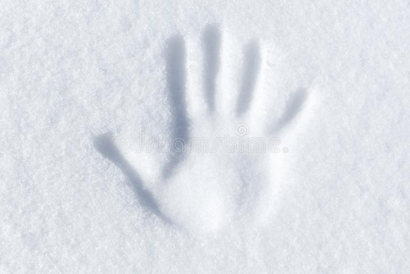 Copie de paume dans la neige blanche fraîche photo stock