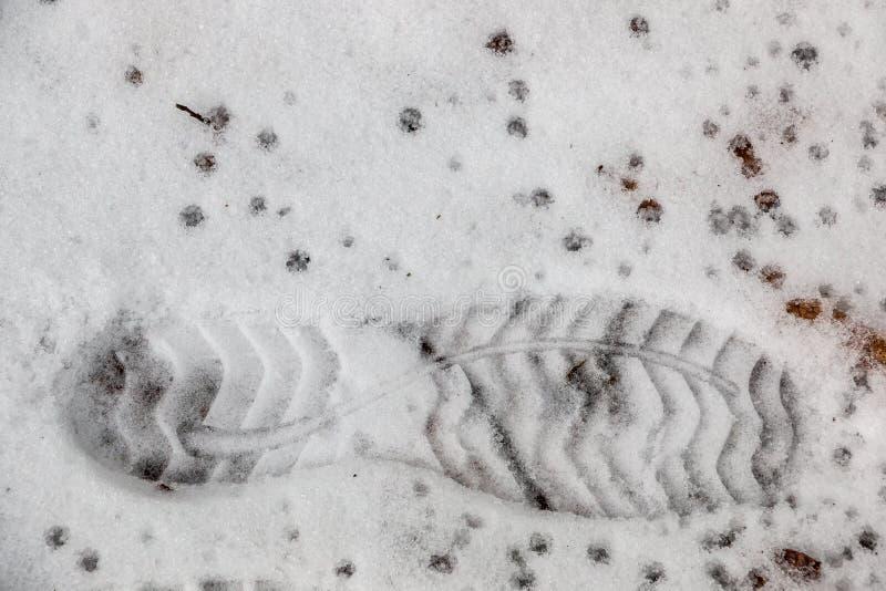 Copie de pied d'une chaussure humaine sur la neige blanche images stock
