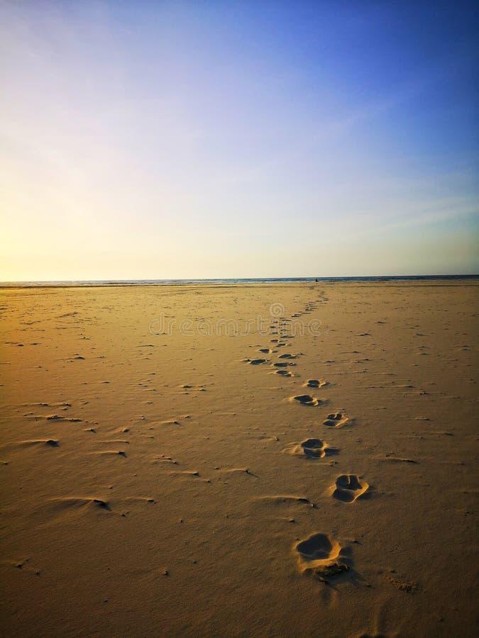 Copie de pied sur la plage sablonneuse blanche, marchant nu-pieds le long de la plage photos stock