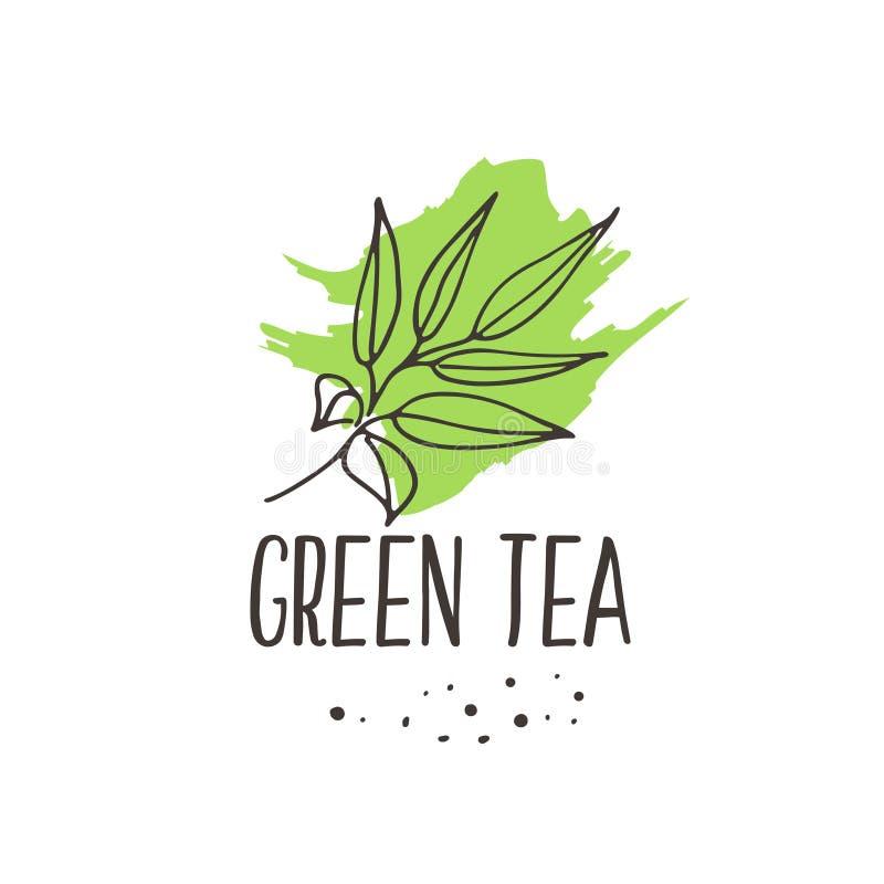 Copie de thé vert illustration libre de droits