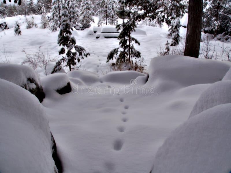 Copies dans un paysage d'hiver images libres de droits