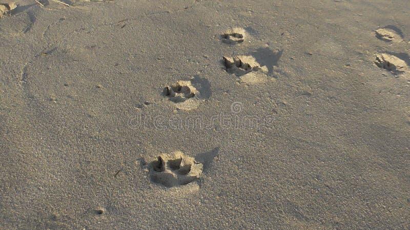 Copies de chien image libre de droits