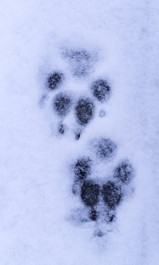 Copies de patte de chien dans la neige Fond photo libre de droits