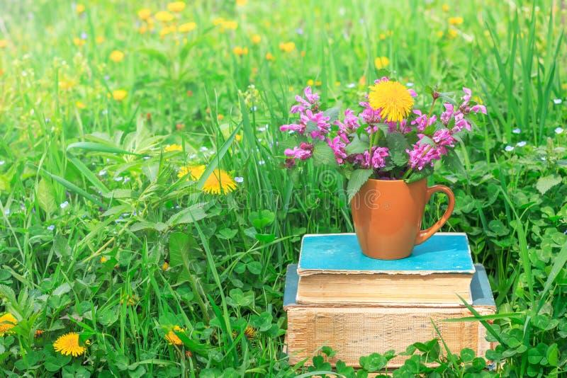 Copo cerâmico com plantas de florescência em uma pilha de livros velhos em um esclarecimento com um trevo verde imagem de stock royalty free