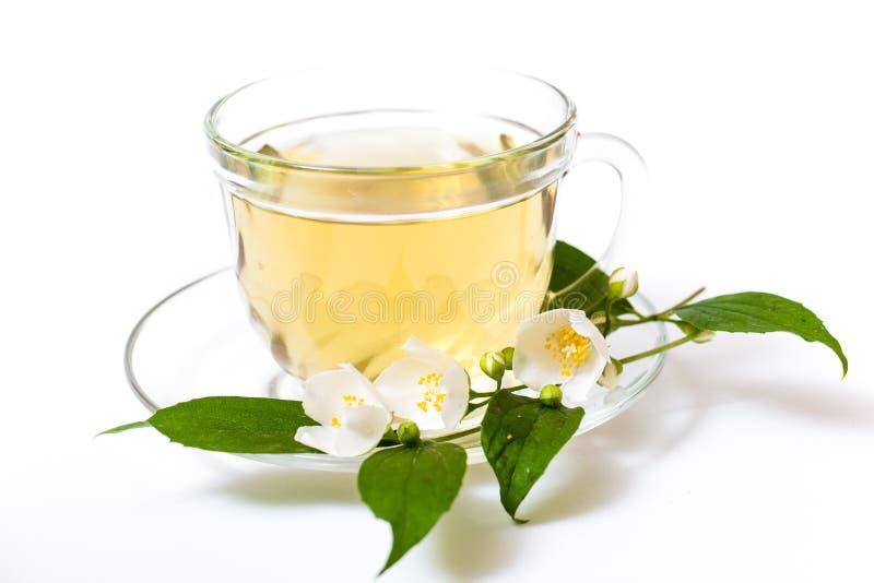 Copo com as folhas do chá verde e do verde imagem de stock royalty free